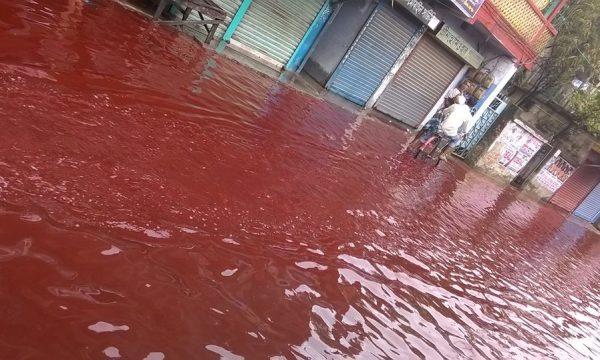Pse bie shiu i kuq?