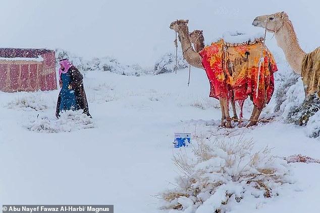Senzacionale-Sahara mbulohet me borë, temperatura minus 2 gradë C!